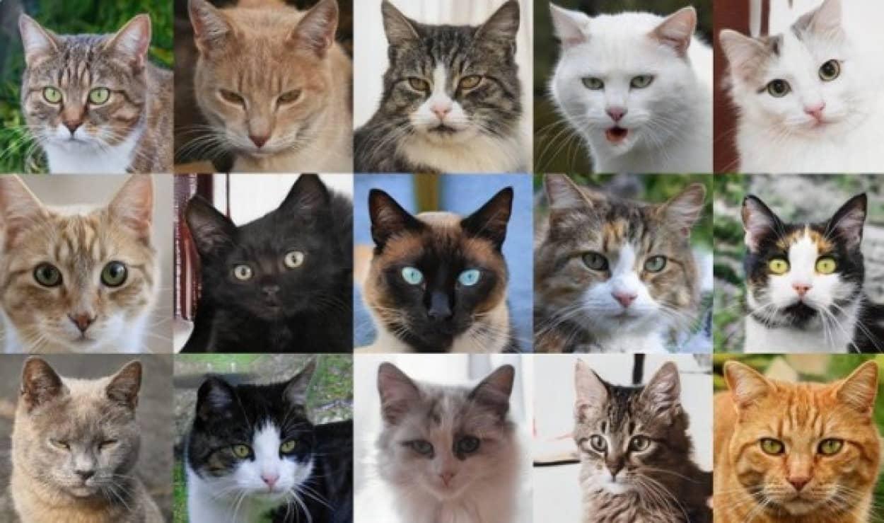 この世に存在しない猫の顔を自動生成できるAIが登場