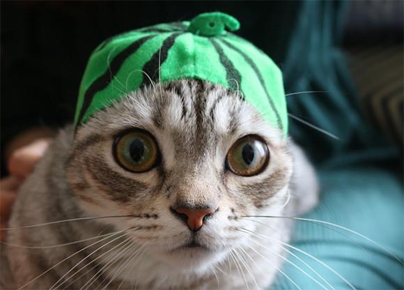 暗闇でも見える、猫の目の秘密にズームイン!