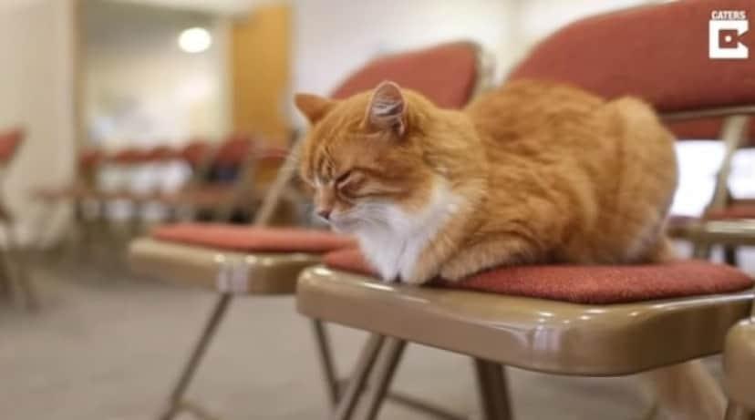 funeral cat5_e