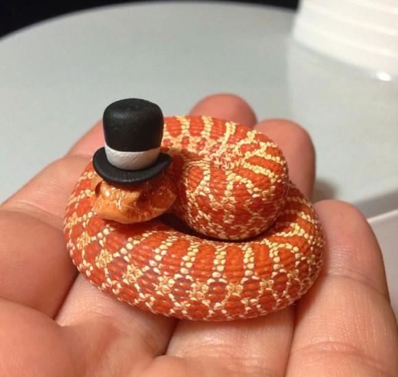 そんなもの被せたくらいでっヘビが・・・か、かわいいじゃないか!蛇に帽子をかぶせたら思いのほかかわいくなる事案