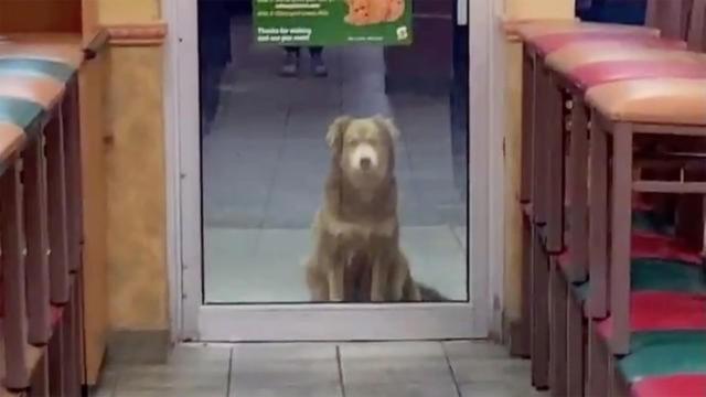 毎日同じ時間にサンドウィッチ屋に餌をもらいに来る野良犬。地域住民が協力しあってお世話(アメリカ)