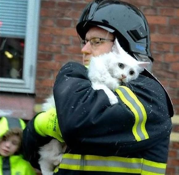 人間と動物のやさしい関係。動物たちを救おうとした人々の写真