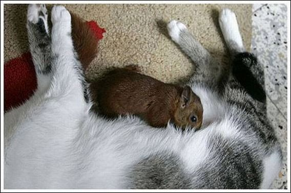 cats_and_squirell_03