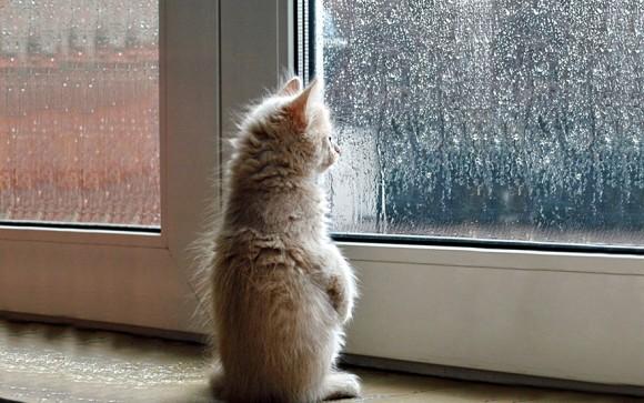 飼い主の帰りを待っている?窓際の猫たち