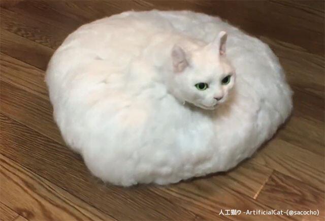 未来の猫は地毛をお掃除してくれる?