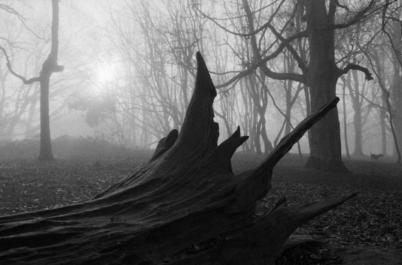 fog_04