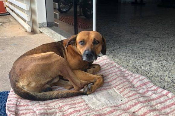 4か月間病院の前で、飼い主の帰りを待ち続ける犬。だが飼い主はすでに帰らぬ人に...(ブラジル)