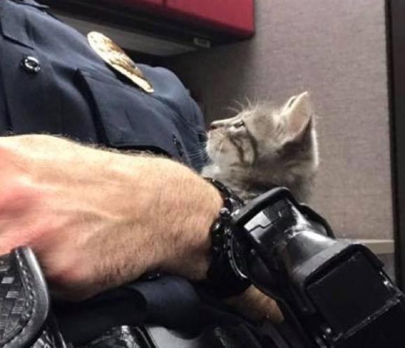 迷子の子猫ちゃん、困ってしまってニャンニャンしていたところ警察官に保護され、そのまま飼われるというNNN事案