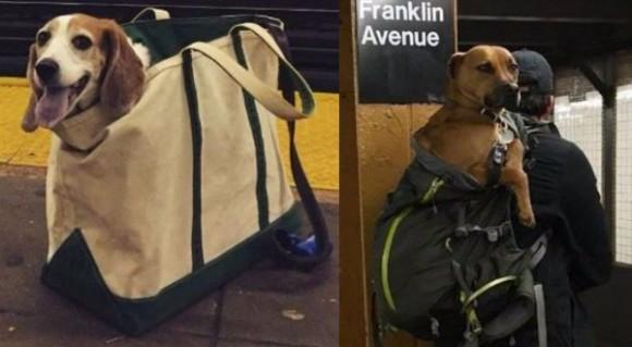 ニューヨークの地下鉄犬事情。「バッグに入らない動物の持ち込み禁止」というルールを独創的に守るニューヨーカーたち