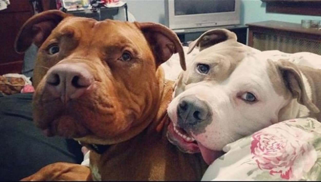 犬の熱い友情