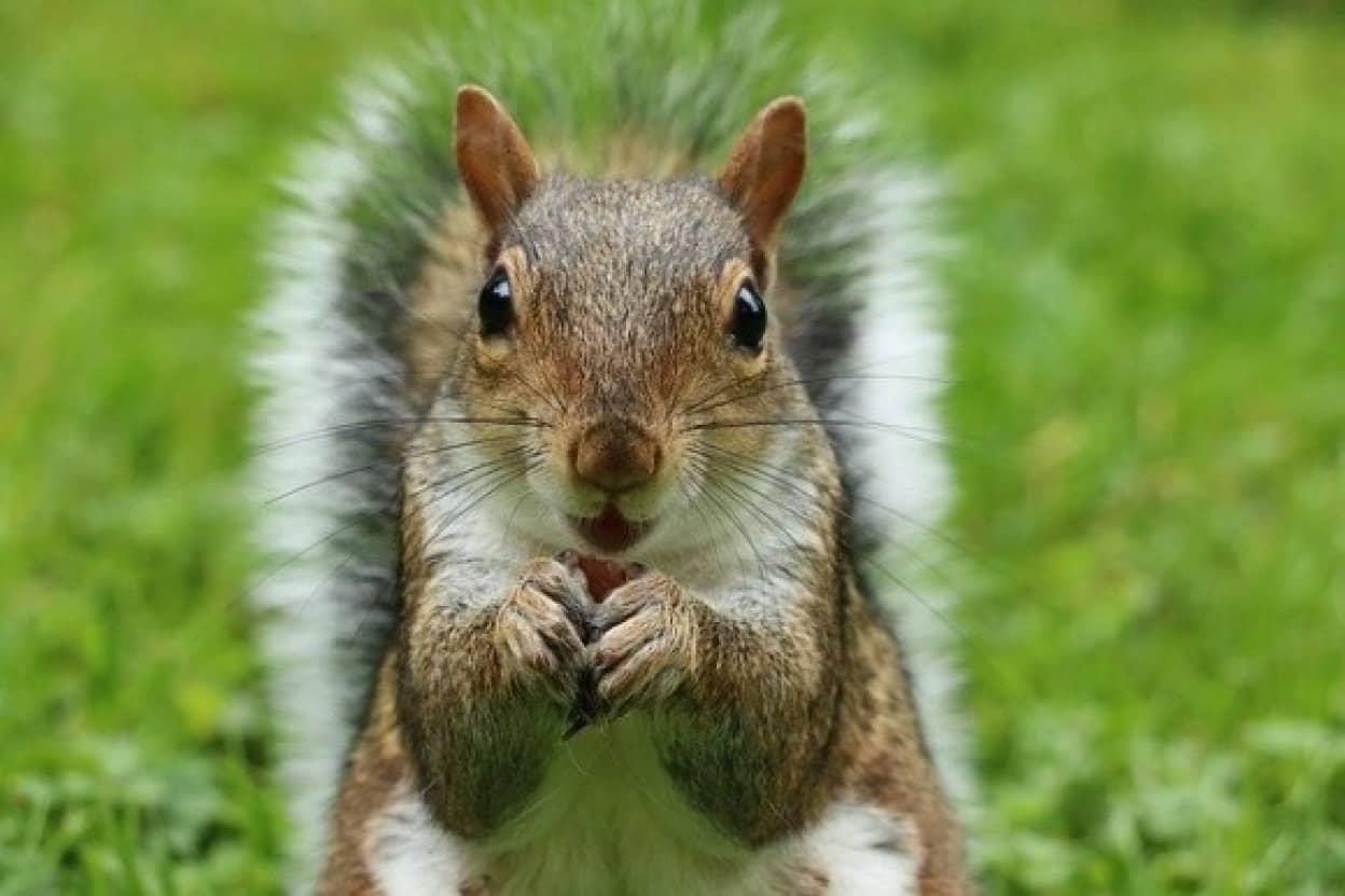 squirrel-2962847_640_e