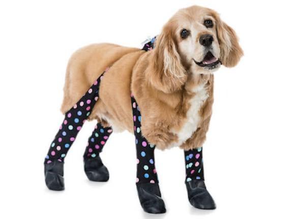 犬だって寒かろう。靴と一体化して脚全体を覆う「犬用レギンス」が誕生していた(アメリカ)