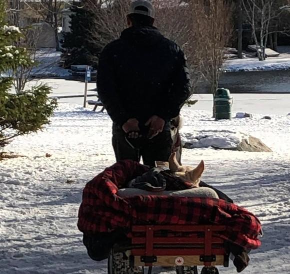 病気で動けなくなった愛犬をワゴンに乗せ、毎日散歩に連れていく男性(カナダ)