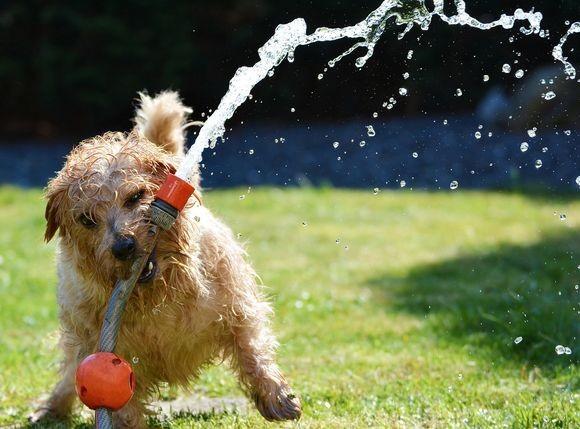 sprinkler-puppy_pixabay