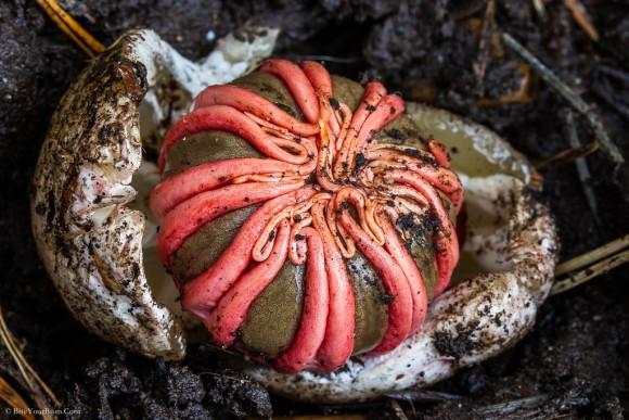 なんでそうなった?割とマジで見た目がヤバイ、だけどすごく面白い10のキノコ・菌類