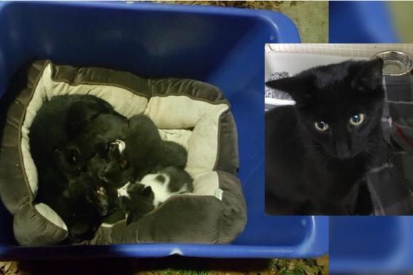 母猫じゃなかった!!捨てられた子猫たちを必死に守っていた猫の正体は?(アメリカ)