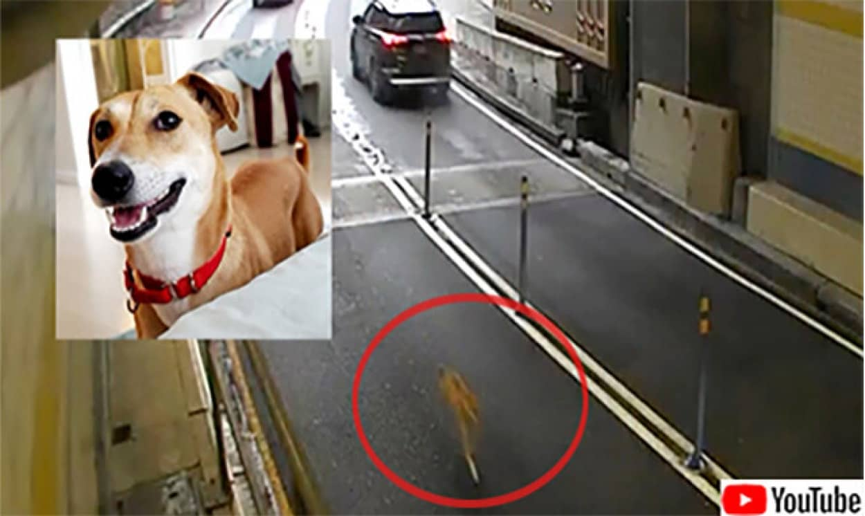 散歩中逃亡した暴走犬、1週間後にようやく保護