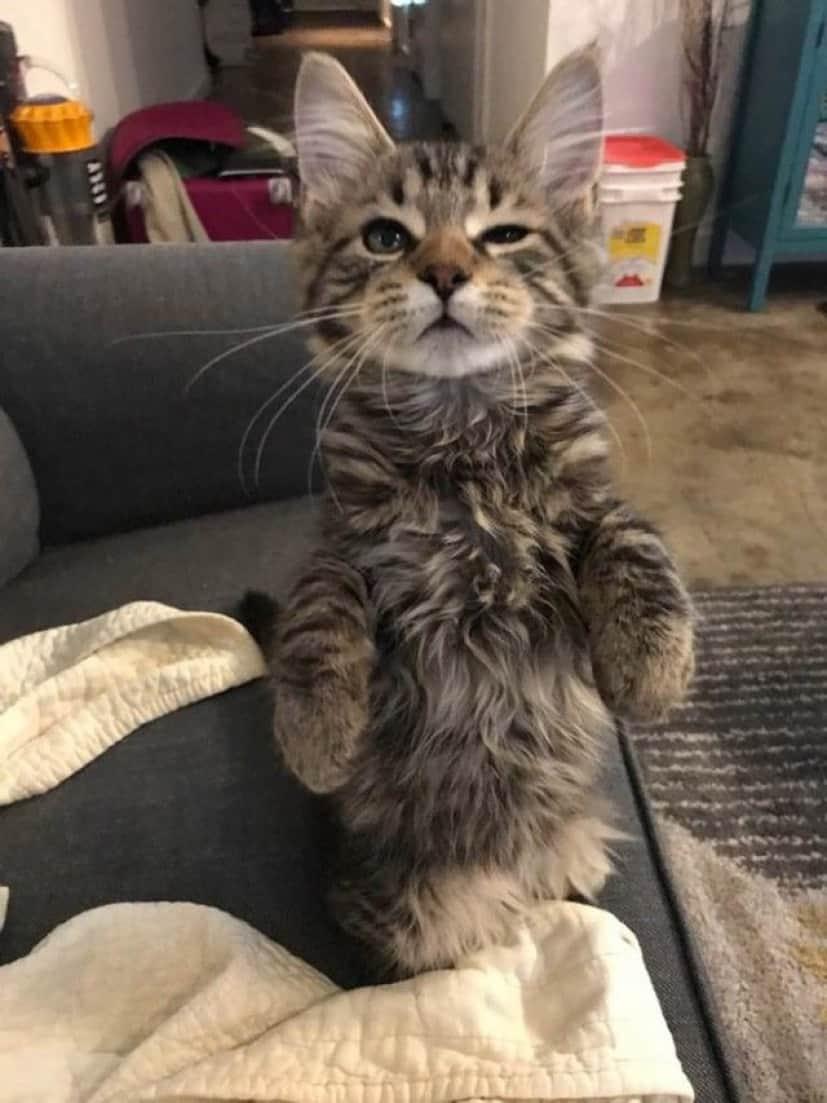 standing-cats15_e