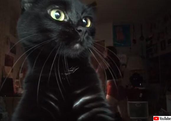 やっぱ猫だろ。飼い主がフラフープダンスを撮影中カットインしてきた猫