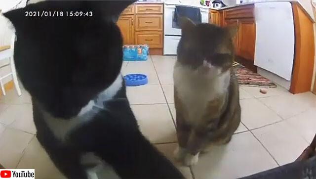 カメラ付自動給餌器のおこぼれをもらおうと叩きまくる猫