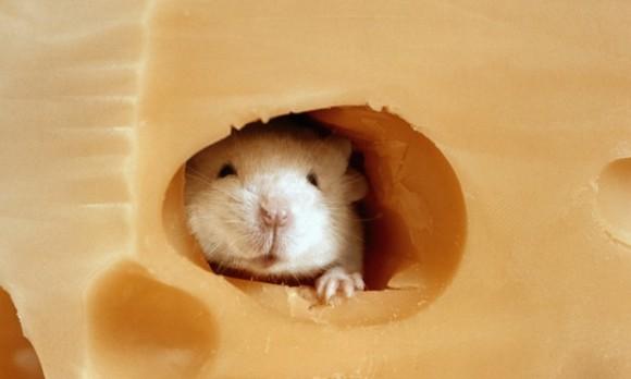 睡眠中のマウスにニセの幸せな記憶を植え付けることに成功(フランス研究)