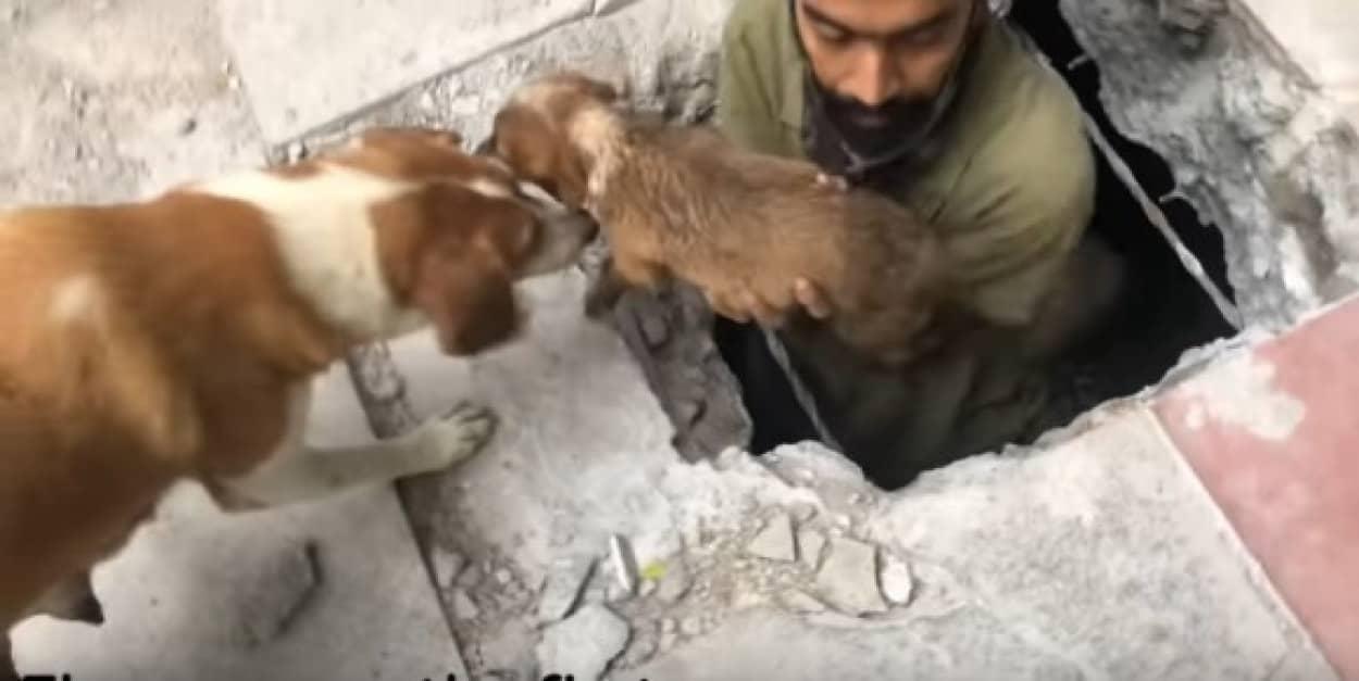 10時間かけて落ちた子犬を救出。母親と小犬は感謝の気持ちを伝える