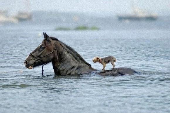 同種だって異種だって。仲良くお互いを助け合っているように見える動物たちの画像
