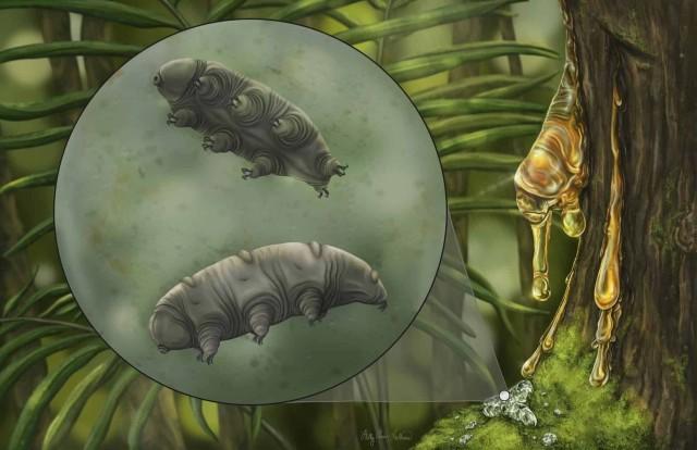 1600万年前の琥珀の中に閉じ込められた新種のクマムシを発見