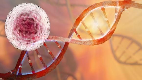米国初、ヒト受精卵の遺伝子編集に成功