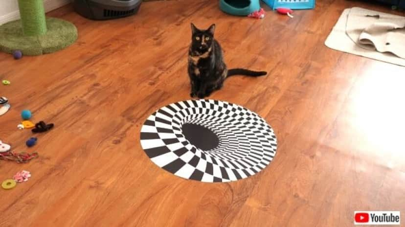 illusions2_640