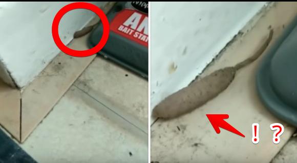 これは何?イモムシとネズミのハイブリッドみたいな謎生物の正体に衝撃!(イギリス)