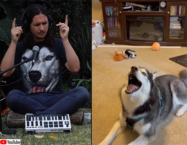 今度は歌うハスキー犬とコラボ。いい感じのリミックス曲が完成!