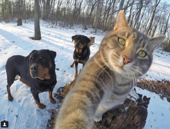 猫が自撮りを覚えたらしい。犬を引き連れナイスショットしちゃうんだからもぅ。