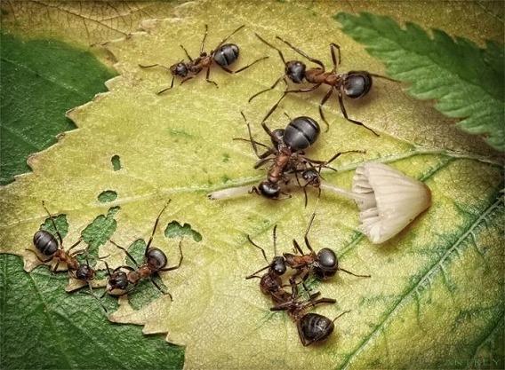 ants_24