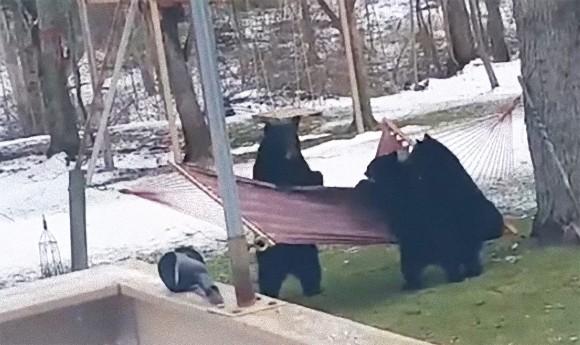 リラックマしたかった。民家の裏庭でハンモックをたしなもうとする3匹のクマのドタバタ