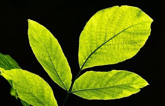 植物の光合成をモデルにした「人工葉」 太陽の光で二酸化炭素を酸素に変える技術