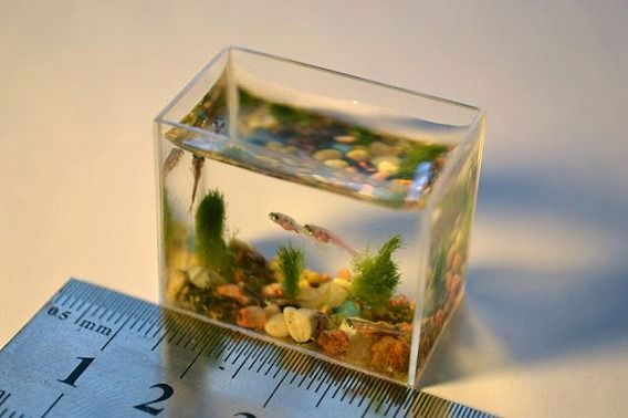 the_worlds_smallest_640_02