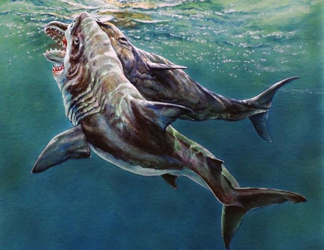 メガロドンに致命的な攻撃を受けたと思われるマッコウクジラの化石が発見される