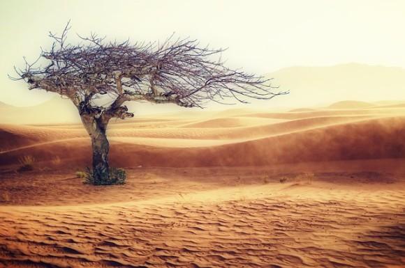 desert-2227962_640_e