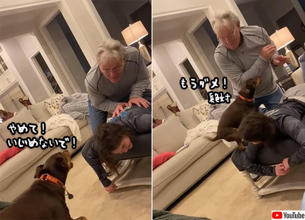 犬は少女を守るために立ち上がった。たとえそれが勘違いでも