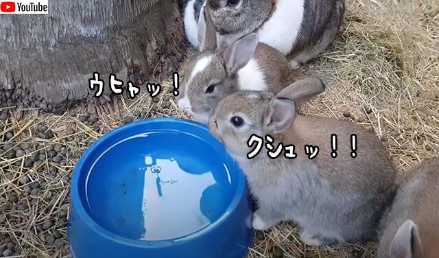 ウサギのくしゃみがかわいい