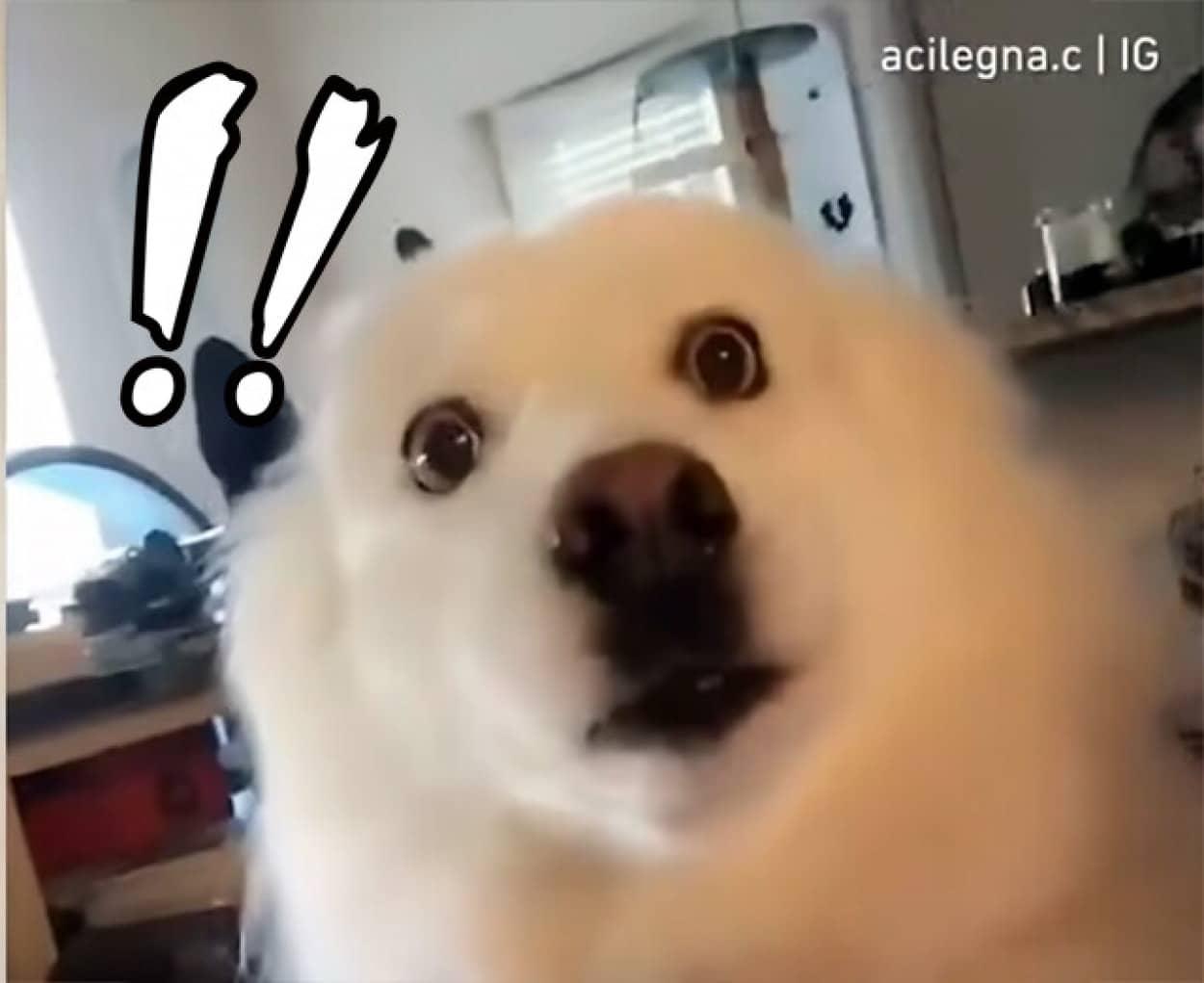 飼い主に別の犬の匂いがついていたときの犬の反応が面白い