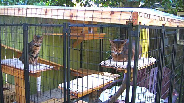 ここで好きなだけ外の風を楽しんで!「お外」を知らなかった家猫たちのために、庭に遊び場を作ったよ
