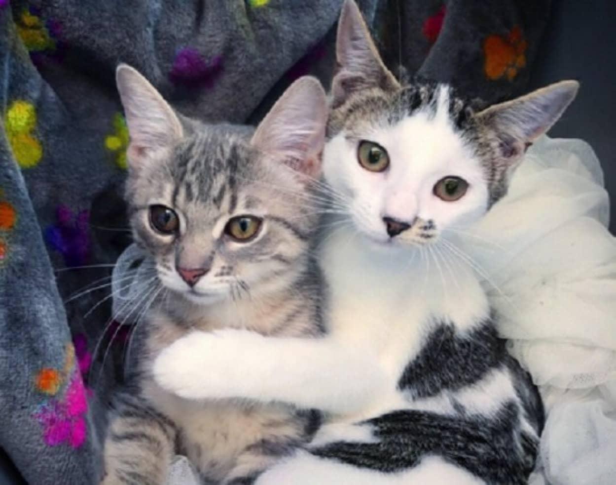 運命の出会い 猫と猫が親密な絆で結ばれる