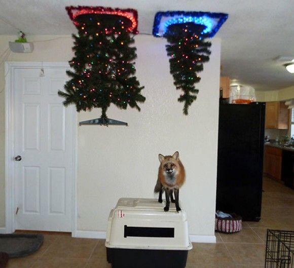 クリスマスツリーをペットから守れ!ワシャワシャされがちなツリーを守るための創意工夫&脱力的アイディア