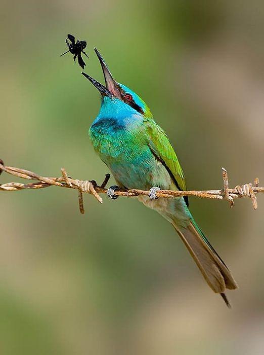 birds_27