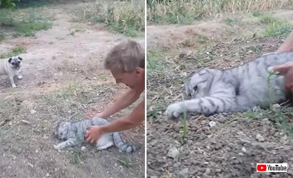 「わしゃまだ帰らぬ!」文字通り石にかじりついてでも家に帰りたくない猫