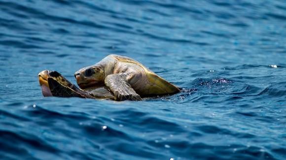 turtle-1875842_640_e