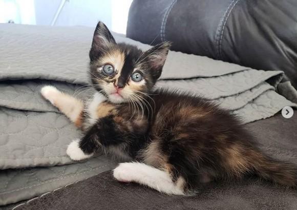 NNNの暗躍か?人間に助けを求めて近づいてきた子猫、永遠の家を手に入れる(アメリカ)