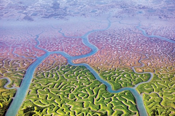 驚くほど脳と似ている。「自然の脳」と呼ばれる沼地(スペイン)